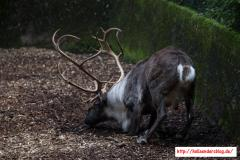 2017-09-22 - Zoo Wuppertal 44