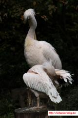 2017-09-22 - Zoo Wuppertal 45
